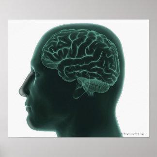 Menschlicher Kopf im Profil, welches das Gehirn ze Poster