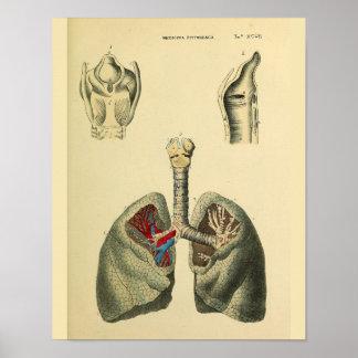 Menschlicher Lunge-Trachea-Anatomie-Kunst-Druck Poster