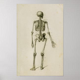 Menschlicher Skeleton hinterer Vintager Poster