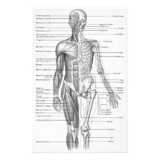 Menschliches Anatomie-Diagramm Briefpapier
