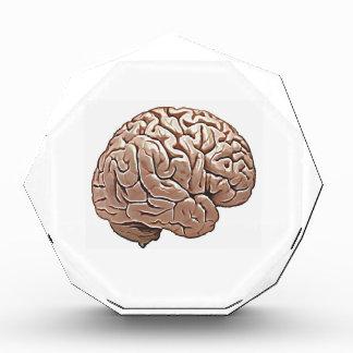 menschliches Gehirn Acryl Auszeichnung