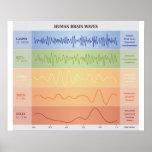 Menschliches Gehirn-Wellen-Diagramm - Poster