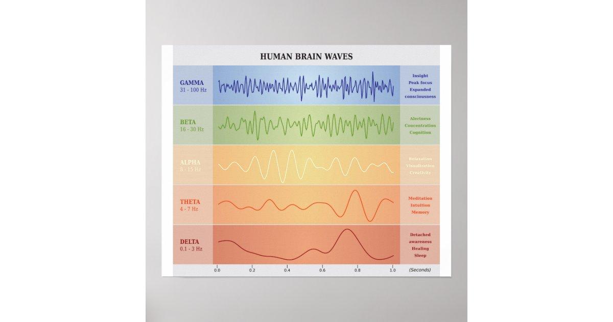 Menschliches Gehirn-Wellen-Diagramm - Poster   Zazzle