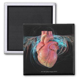 Menschliches Herz, Computergrafik Quadratischer Magnet