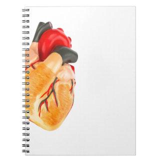 Menschliches Herzmodell auf weißem Hintergrund Spiral Notizblock