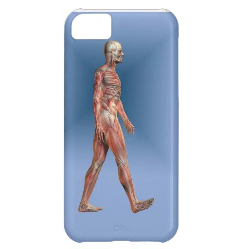 Menschliches männliches darstellendes Skelett und  iPhone 5C Cover