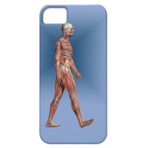Menschliches männliches darstellendes Skelett und  iPhone 5 Case