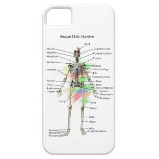 Menschliches männliches Skelett auf einem iphone 5 Hülle Fürs iPhone 5