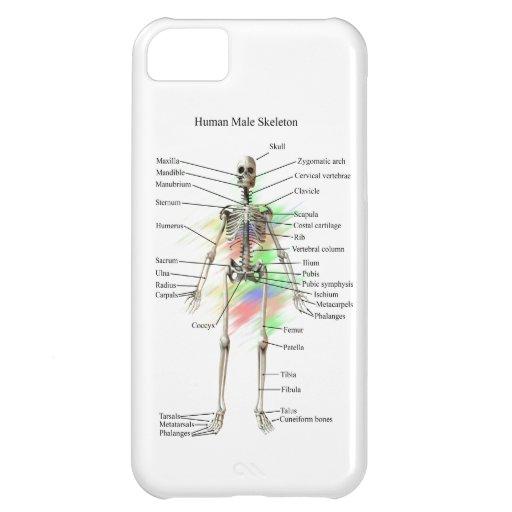 Menschliches männliches Skelett auf einem iphone 5 iPhone 5C Hüllen