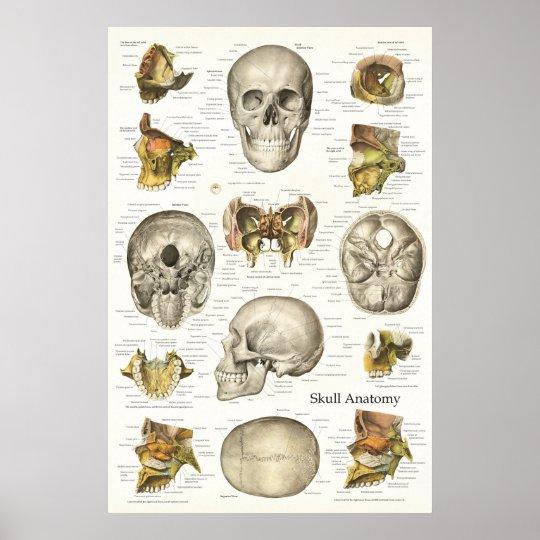 Menschliches Schädel-Anatomie-Diagramm 24 x 6 Poster | Zazzle