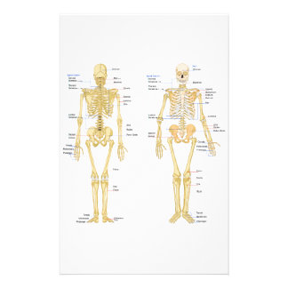 Menschliches Skelett beschriftet Anatomiediagramm Briefpapier