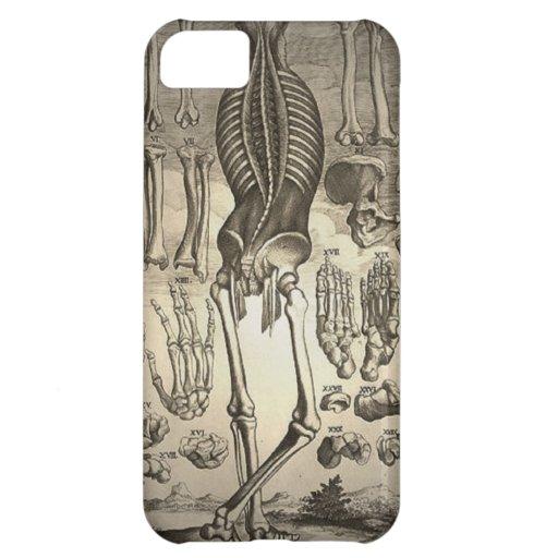 Menschliches Skelett Ca 1741 Hüllen Für iPhone 5C