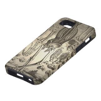 Menschliches Skelett Ca 1741 Schutzhülle Fürs iPhone 5