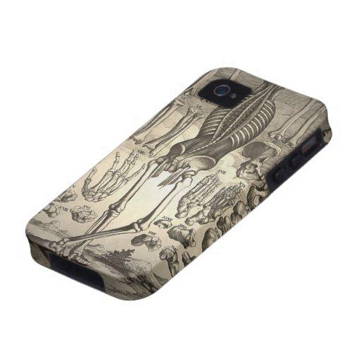Menschliches Skelett Ca 1741 Case-Mate iPhone 4 Hülle