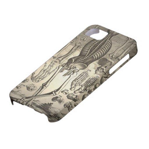 Menschliches Skelett Ca 1741 iPhone 5 Etui