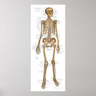 Menschliches skelettartiges poster