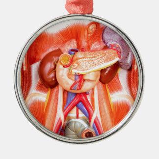 Menschliches Torsomodell mit Organen Silbernes Ornament