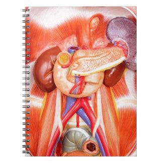 Menschliches Torsomodell mit Organen Spiral Notizblock