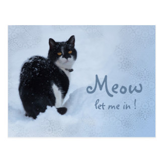 Meow ließ mich herein! Gedanken der Katze CC0826 Postkarte