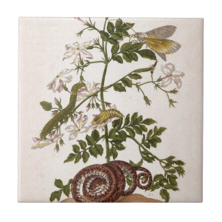 Metamorphose insectorum Surinamensium Kleine Quadratische Fliese