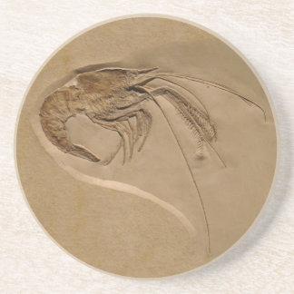 Metapenaeus Monoceros Sandstein Untersetzer