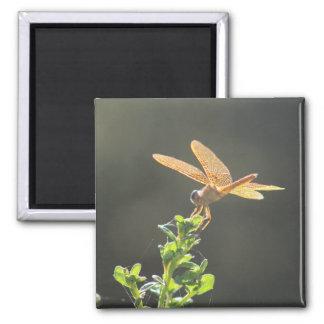 Mexikaner Amberwing Libellen-Foto-Magnet Quadratischer Magnet