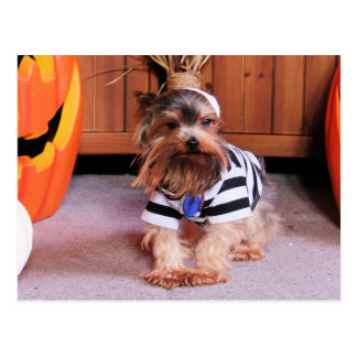 Mickey - Yorkshire Terrier - Shannon Postkarte