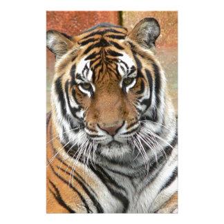 Mieten Tigres in der Betrachtung Briefpapier