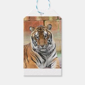 Mieten Tigres in der Betrachtung Geschenkanhänger