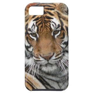 Mieten Tigres in der Betrachtung iPhone 5 Case