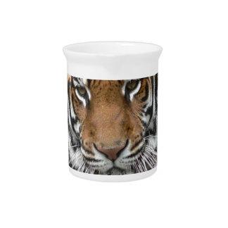 Mieten Tigres in der Betrachtung Krug