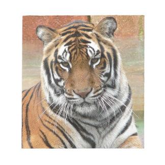 Mieten Tigres in der Betrachtung Notizblock