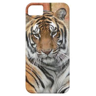 Mieten Tigres in der Betrachtung Schutzhülle Fürs iPhone 5