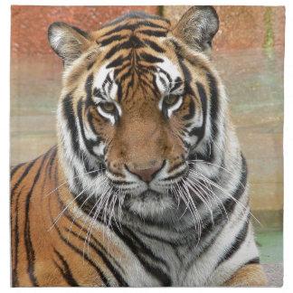 Mieten Tigres in der Betrachtung Serviette