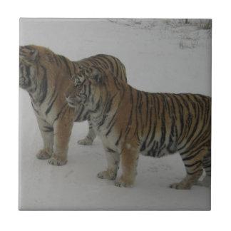 Mieten zwei sibirische Tiger Fliese