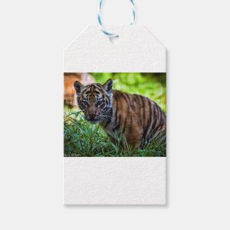 MieteSumatran Tiger CUB Geschenkanhänger