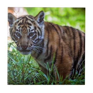 MieteSumatran Tiger CUB Keramikfliese