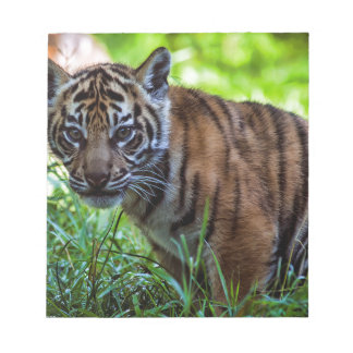 MieteSumatran Tiger CUB Notizblock