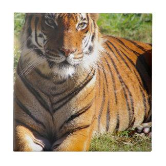 Mietmalaiischer Tiger Keramikfliese