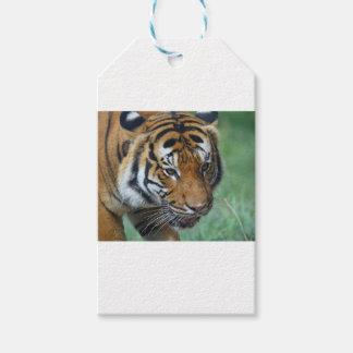 Mietmalaysische Tiger-Nahaufnahme Geschenkanhänger