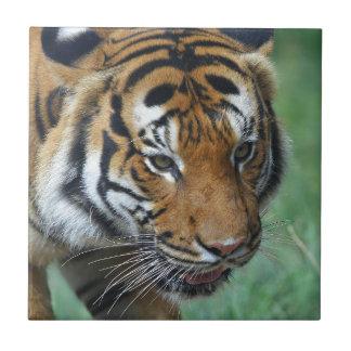 Mietmalaysische Tiger-Nahaufnahme Keramikfliese