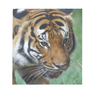 Mietmalaysische Tiger-Nahaufnahme Notizblock