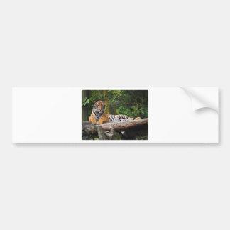Mietmalaysischer Tiger, der auf Klotz Lounging ist Autoaufkleber
