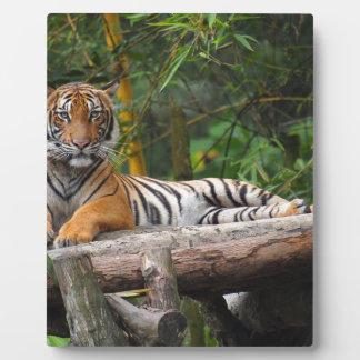 Mietmalaysischer Tiger, der auf Klotz Lounging ist Fotoplatte