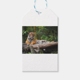 Mietmalaysischer Tiger, der auf Klotz Lounging ist Geschenkanhänger