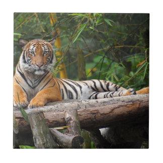 Mietmalaysischer Tiger, der auf Klotz Lounging ist Keramikfliese