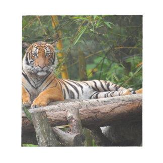 Mietmalaysischer Tiger, der auf Klotz Lounging ist Notizblock