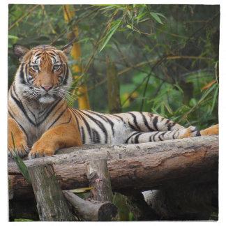 Mietmalaysischer Tiger, der auf Klotz Lounging ist Serviette