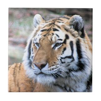 Mietstoic-königlicher bengalischer Tiger Fliese