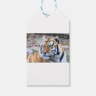 Mietstoic-königlicher bengalischer Tiger Geschenkanhänger